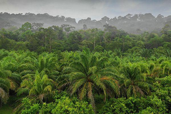 Top 10 khu bảo tồn thiên nhiên ấn tượng nhất ở Malaysia
