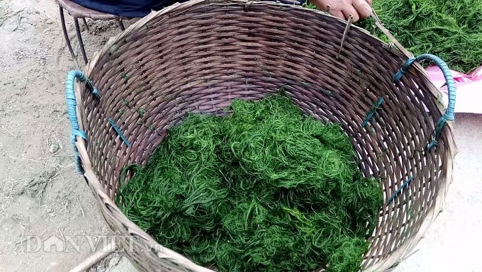Rêu nướng - món ăn nghe thật lạ tai