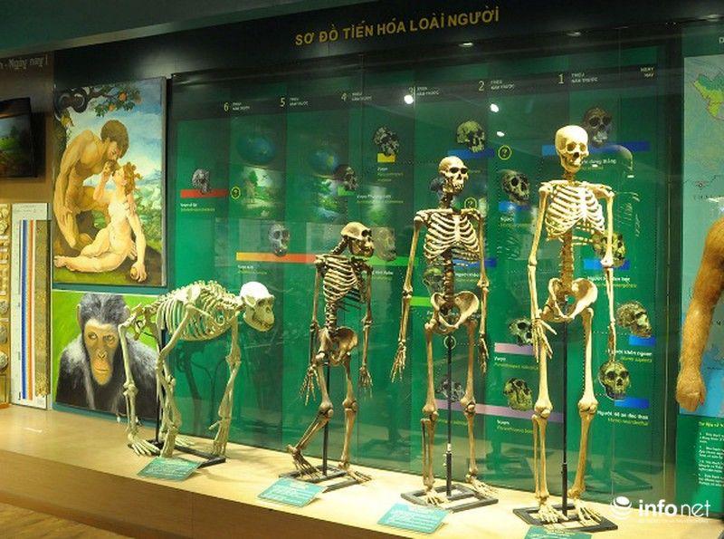 Khu trưng bày lịch sử quá trình tiến hóa của loài người