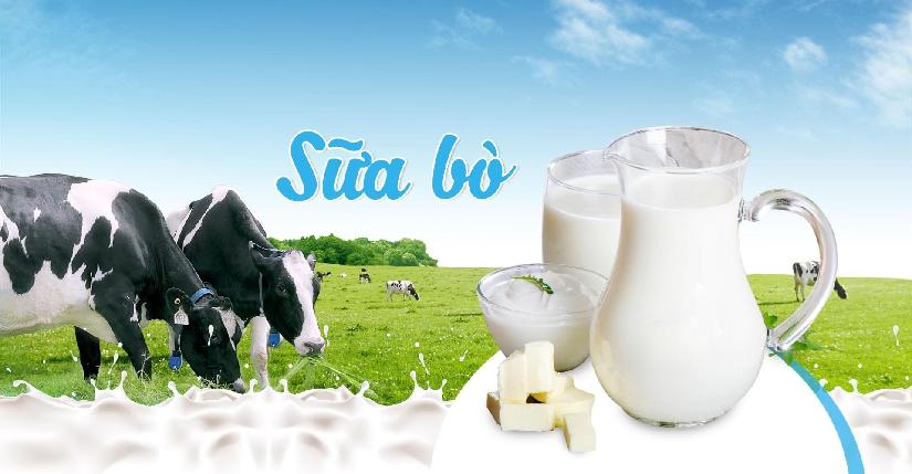 Sữa tươi Mộc Châu thơm ngon bổ dưỡng